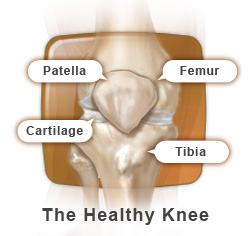 The Healthy Knee